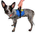 FitPAWS® Safety Harness