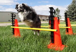 FitPAWS® Hurdle Set